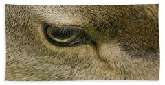 Deers Gentle Eye Beach Sheet