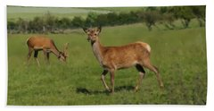 Deers On A Hill Pasture. Beach Towel