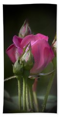 Delicate Rose With Buds Beach Towel