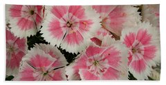 Beach Towel featuring the photograph Delightful Dianthus by Jean Noren