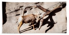 Beach Towel featuring the photograph Desert Bighorn Ram by Lawrence Burry