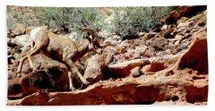 Desert Bighorn Ram Walking The Ledge Beach Sheet