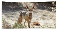 Beach Towel featuring the photograph Desert Fox by Arik Baltinester