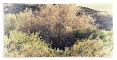 Desert Ironwood Afternoon Beach Sheet