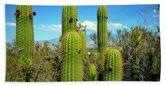 Desert Plants - All In The Family Beach Sheet by Glenn McCarthy