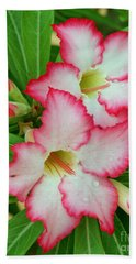 Beach Sheet featuring the photograph Desert Rose With Buds And Water by Larry Nieland
