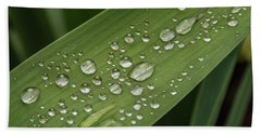 Beach Towel featuring the photograph Dew Drops On Leaf by Jean Noren