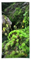 Beach Towel featuring the photograph Dew Drops On Moss And Sprouts In The Sun by Kelly Hazel