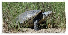 Diamondback Terrapin Mount Sinai New York Beach Sheet
