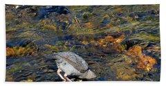 Beach Towel featuring the photograph Diving For Food by Ausra Huntington nee Paulauskaite