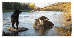 Dog And Cat Exploring Rocks Beach Towel by Kent Lorentzen