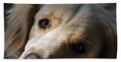 Dog Eyes Beach Sheet
