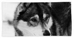 Dog - Monochrome 3 Beach Sheet