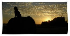 Dog On Hay Greeting Sunrise Beach Towel by Kent Lorentzen