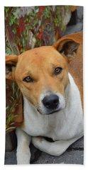 Doggie Style Beach Sheet