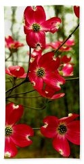 Dogwood Blooms In The Spring Beach Sheet