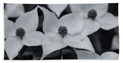 Beach Towel featuring the photograph Dogwood In Monochrome by Rachel Cohen