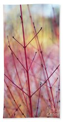 Dogwood Midwinter Fire Stems Beach Towel