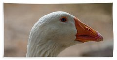 Domestic Goose Beach Sheet