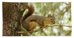 Beach Towel featuring the photograph Douglas Squirrel by Sean Griffin