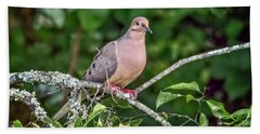 Dove On A Branch Beach Towel