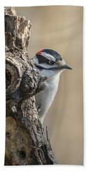 Downy Woodpecker Img 1 Beach Towel
