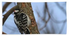 Beach Towel featuring the photograph Downy Woodpecker by Living Color Photography Lorraine Lynch