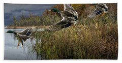 Drake Mallard Ducks Coming In For A Landing Beach Towel