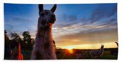 Drama Llamas Beach Sheet