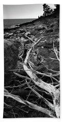 Driftwood Tree, La Verna Preserve, Bristol, Maine  -20999-30003 Beach Towel