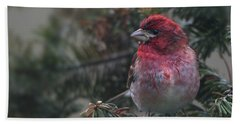 Drizzled Finch Beach Towel