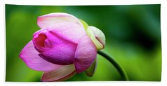 Beach Towel featuring the photograph Droplets On Lotus by Edward Kreis