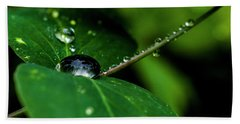 Beach Towel featuring the photograph Droplets On Stem And Leaves by Darcy Michaelchuk