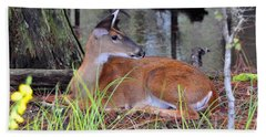 Beach Sheet featuring the photograph Drowsy Deer by Al Powell Photography USA