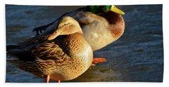 Duck Pair Sunbathing On Frozen Lake Beach Sheet