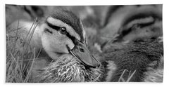 Beach Towel featuring the photograph Ducklings Cuddling Bw by Susan Candelario