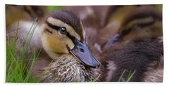 Beach Towel featuring the photograph Ducklings Cuddling by Susan Candelario