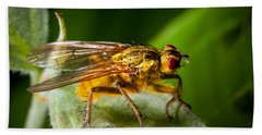 Dung Fly On Leaf Beach Towel