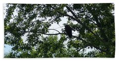 Beach Towel featuring the photograph Eagle At Codorus by Donald C Morgan