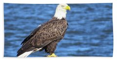 Eagle At East Point  Beach Sheet by Nancy Patterson