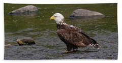 Beach Towel featuring the photograph Eagle Deep In Thought by Debbie Stahre