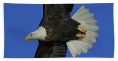 Beach Towel featuring the photograph Eagle Flying Closeup by Coby Cooper