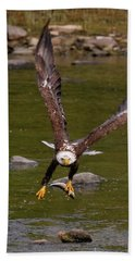 Beach Towel featuring the photograph Eagle Fying With Fish by Debbie Stahre