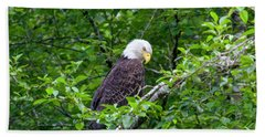 Eagle In The Tree Beach Towel