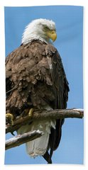 Eagle On Perch Beach Sheet