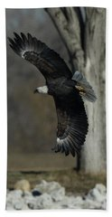 Beach Towel featuring the photograph Eagle Soaring By Tree by Coby Cooper