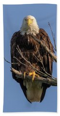 Eagle Stare Beach Towel