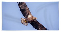 Beach Towel featuring the photograph Eagle Watch 2018 - Third Year Bald Eagle  by Ricky L Jones