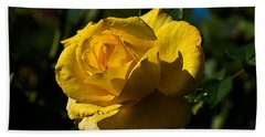 Early Morning Rose Beach Towel by Kenneth Albin