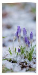Early Spring Crocus Beach Sheet